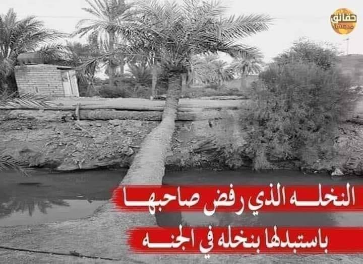قصة نخلة أبا الدحداح