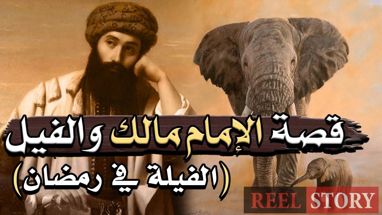ًما أكثر الفيلة في رمضان⁉